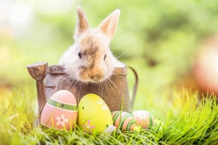 Activités extrascolaires : Mars, avril et vacances de Pâques